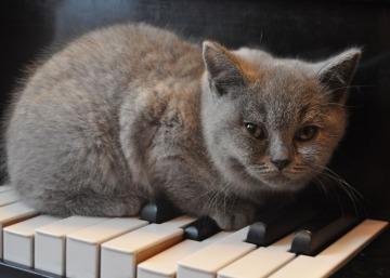 cat-1248012_1280